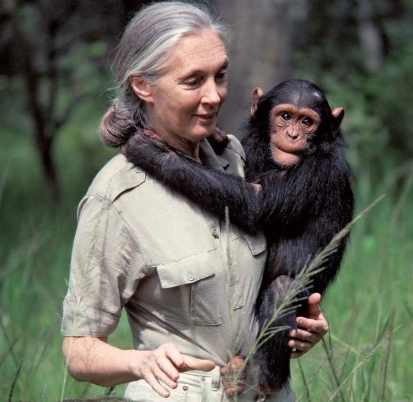 Jane Goodall Job